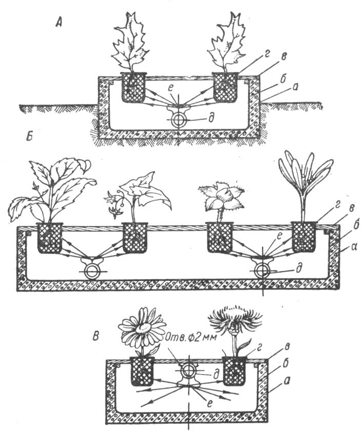Схема культуры растений без