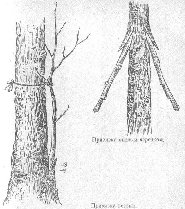 На нижней части ствола дерева