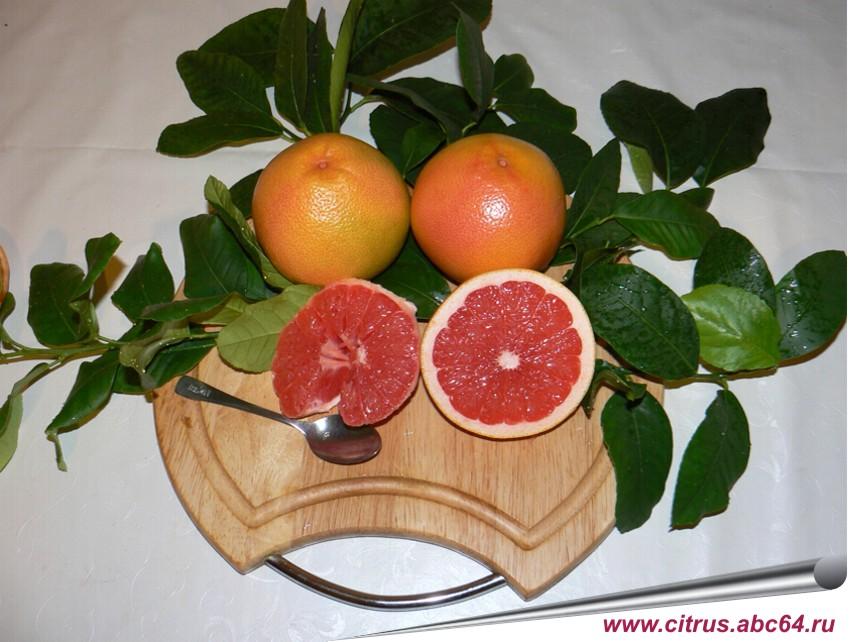 Как посадить и вырастить грейпфрут из косточки в домашних