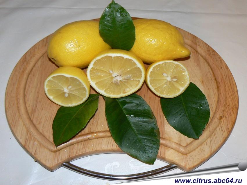 купить саженцы лимона и мандарина комнатных в ростове на дону